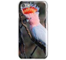 Major Mitchell Cockatoo iPhone Case/Skin