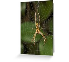Spider in Web Greeting Card