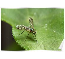 Long Legged Fly Poster