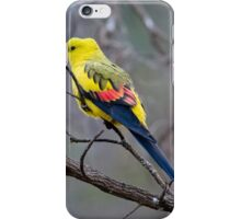 Regent Parrot iPhone Case/Skin