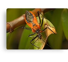 Assassin Bug Canvas Print