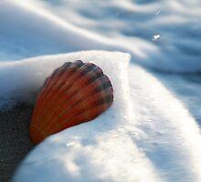 Fan Shell In Surf, Seven Mile Beach, Tasmania by David Jamrozik