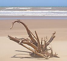 As Driftwood Watches Over The Indian Ocean by AARDVARK