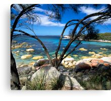 Blue Waters, Bay Of Fires, Tasmania Canvas Print
