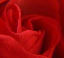 The Heart of a Rose. by NKSharp