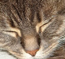 Close up of sleeping cat. by NKSharp