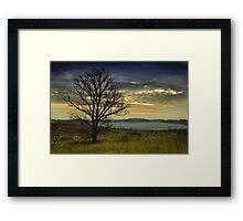 The lonely Oak in the Winter Framed Print