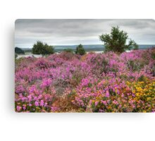 Dull Day at Arne Canvas Print