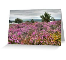 Dull Day at Arne Greeting Card