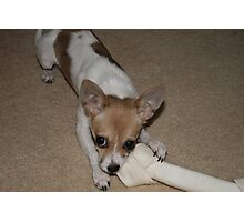 Bella and Her Bone  Photographic Print