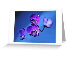 Orchid Surprise Greeting Card