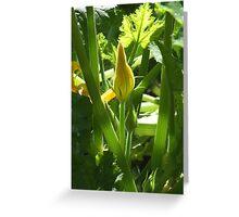 Zucchini Greeting Card