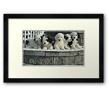 One In Every Crowd Framed Print