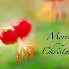 Merry Christmas by Marilyn Cornwell