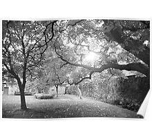 Stirling Garden Poster