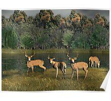 River Deer Poster