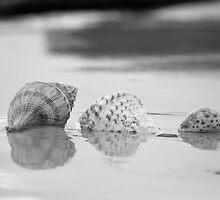 3 Black & White Shells  by Bradley Ede
