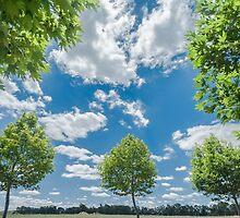 Window to the Sky by metriognome