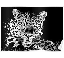 15 Chilled Out Leopard By Chris McCabe - DRAGAN GRAFIX Poster