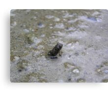 The worlds tiniest frog Canvas Print