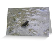 The worlds tiniest frog Greeting Card