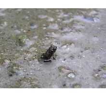 The worlds tiniest frog Photographic Print