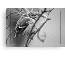 Little Bird in the Night Canvas Print