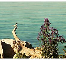Guardian of the sea Photographic Print