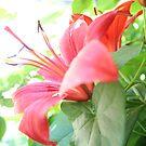 Fiore di Cielo by ayham Salameh