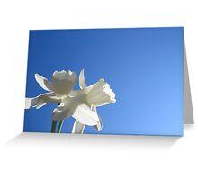 Daffodil Sky Greeting Card