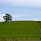 Green Hill by Colin  Ewington