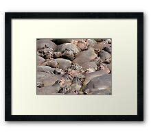 Many Hippos Framed Print