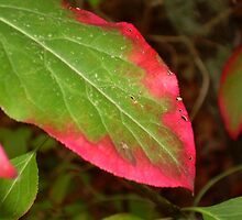 Pink Rimmed Leaf by giddykitty