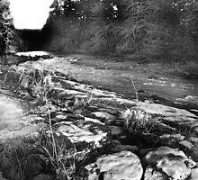stream near fall creek oregon by isaacjc