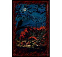 Murder Tree Photographic Print