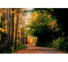 Nature Trail Photographic Print