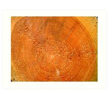 Honey wood Art Print