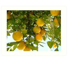 Orange tree Art Print
