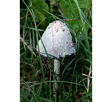 Ink Cap Mushroom Photographic Print