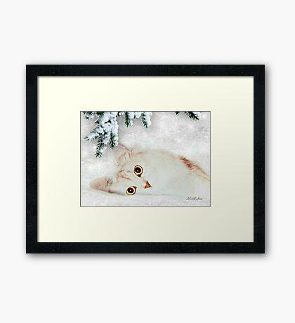 Mistletoe  Framed Print