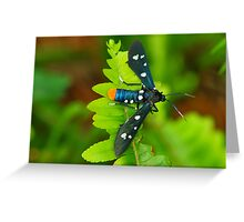 Oleander Moth Greeting Card