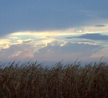 View from the cornfield by lilv123