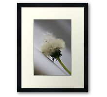 SEED LAUNCHER Framed Print