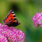 Butterfly by wesleyj1954