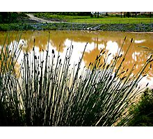 REEDS & REFLECTION Photographic Print