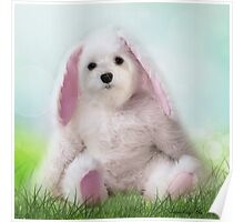 Snowdrop the Maltese - Dressing Up for Easter ! Poster