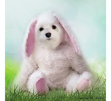 Snowdrop the Maltese - Dressing Up for Easter ! Photographic Print