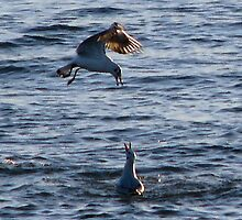 I told you the water would be cold!!!! by Sharon Perrett