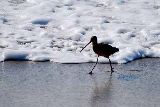 A Walk On The Shore by Robin Robb