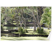 Lau Hala Trees and Pond Poster